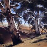 Summer Gums near Tarana  -  80 x 60 - Copyright John Wilson